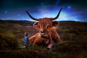 Beef%20Scotland%20Highland%20Kids-ID9332-640x427