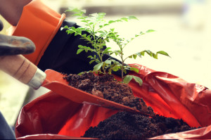 planting_tree_hires